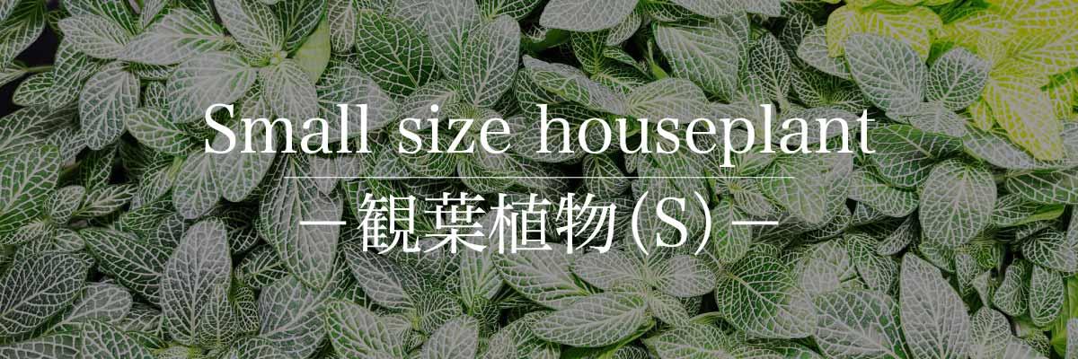 観葉植物(S)