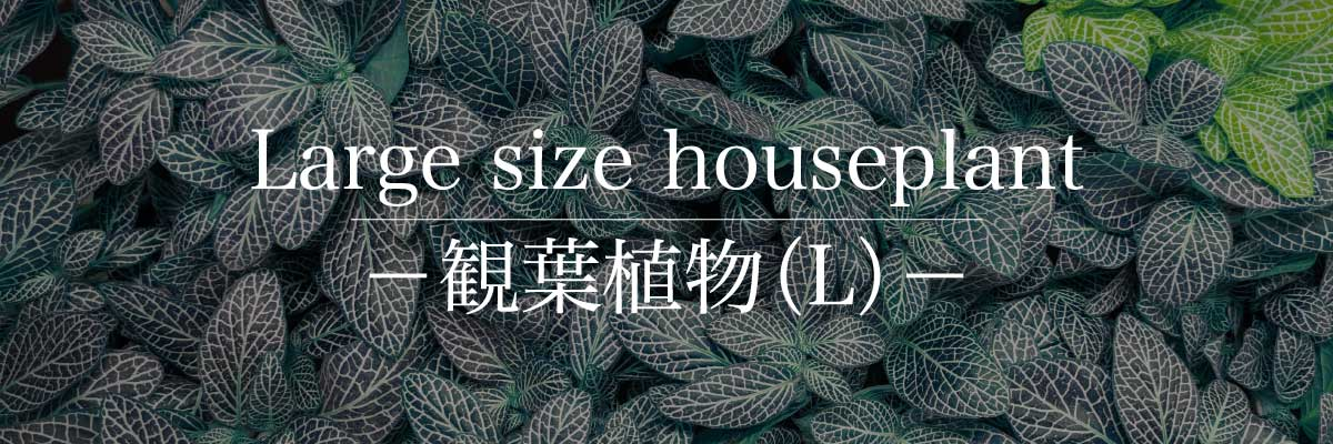 観葉植物(L)
