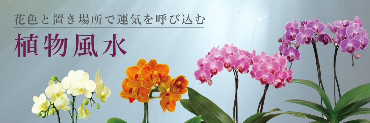 花色と置き場所で運気を呼び込む「植物風水」