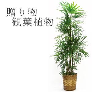 【ギフト】観葉植物