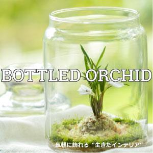 【グリーン】ボトルドオーキッド