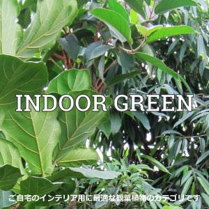 【グリーン】観葉植物