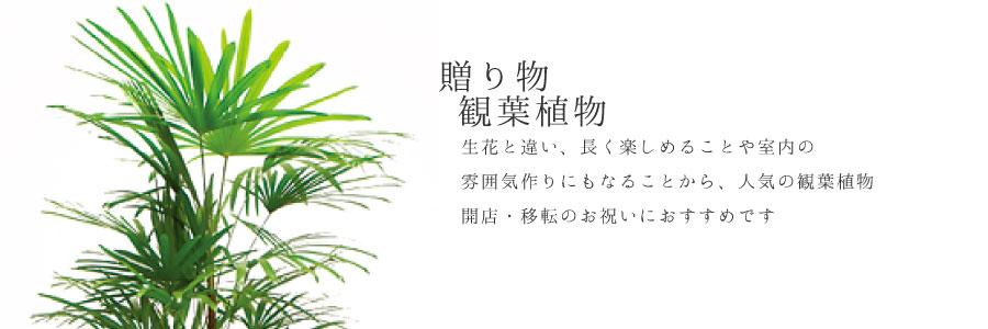 【ギフト】贈る観葉植物のカテゴリー