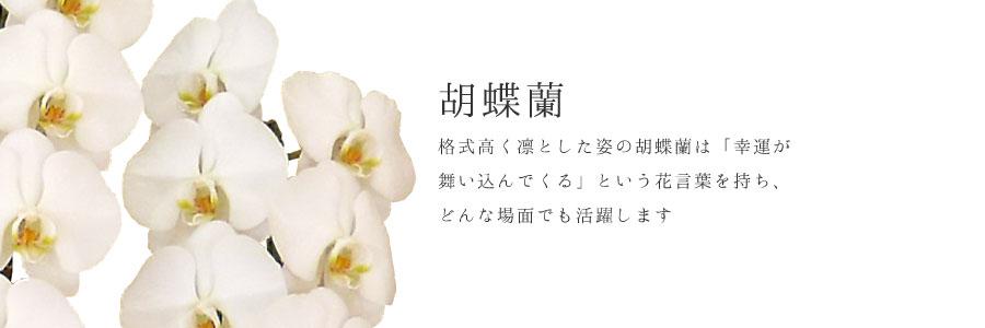 【ギフト】胡蝶蘭カテゴリー