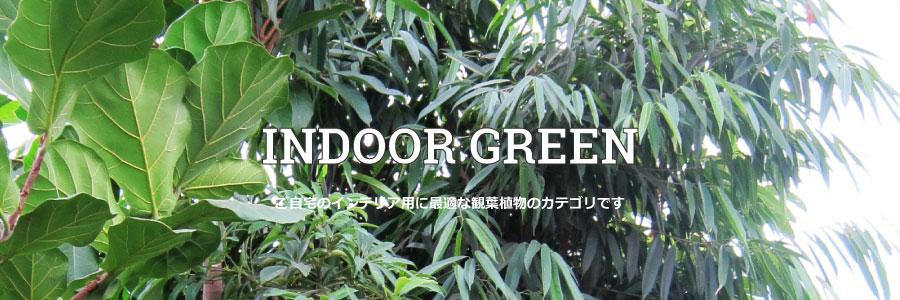 【グリーン】INDOOR GREENのカテゴリー