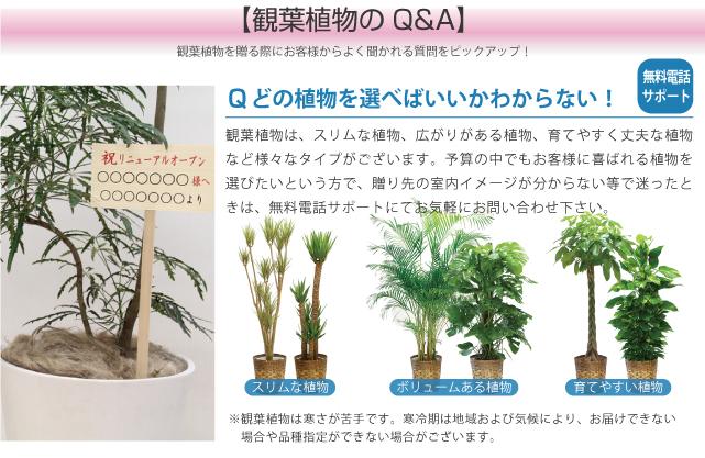 観葉Q&A