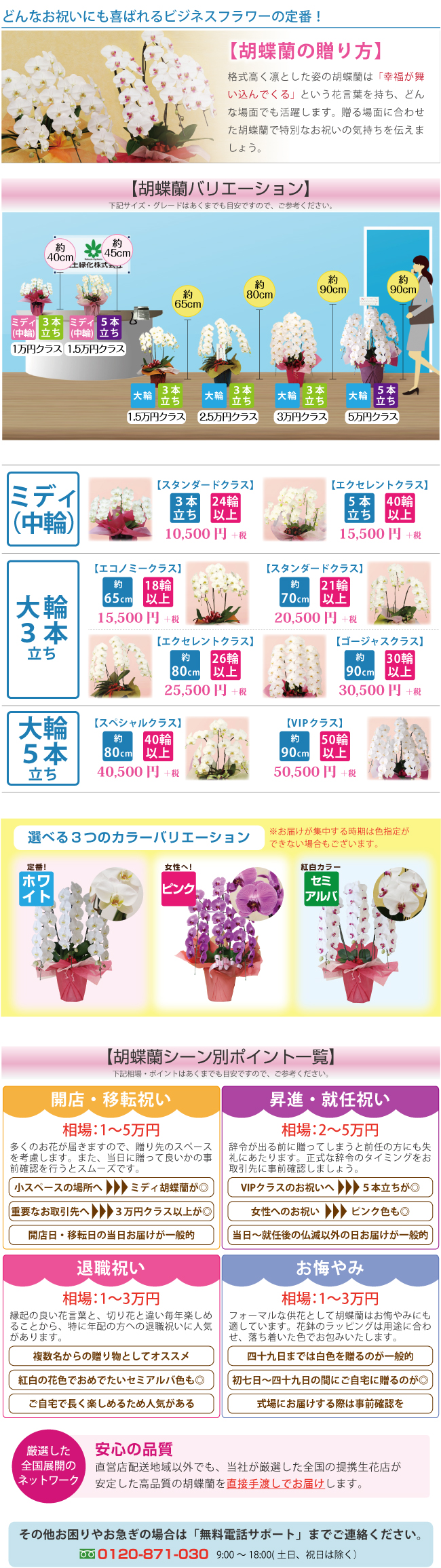 胡蝶蘭の贈り方特集ページ