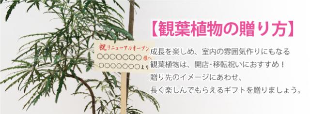 観葉LPタイトル