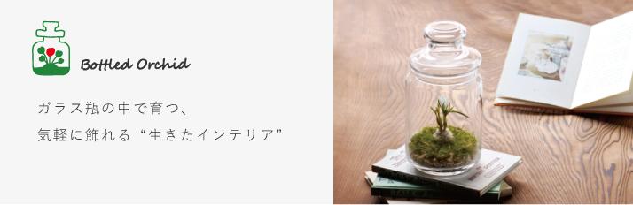 オリジナル商品_ボトルドオーキッド特集トップ